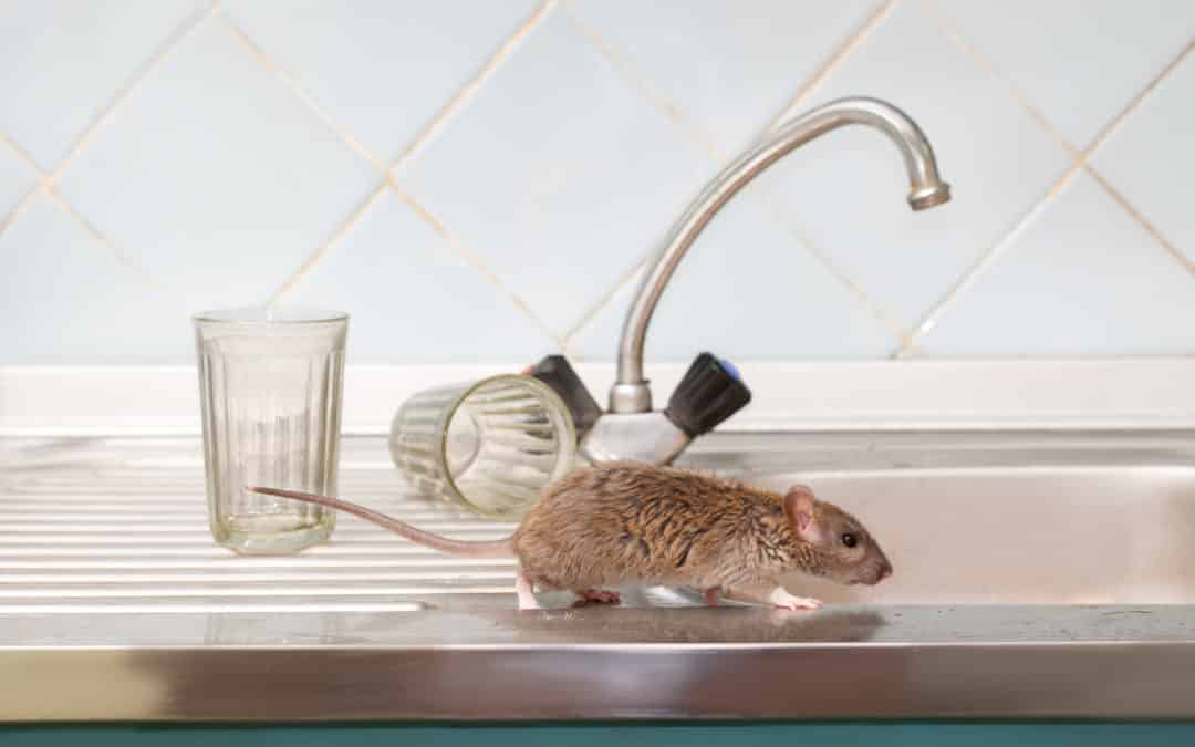 5 Signs of Mice in Your Home | Sage Pest Control